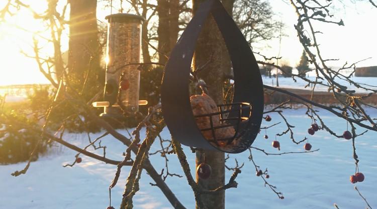 winter vogels voeren