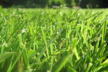 sproeien in het voorjaar gras