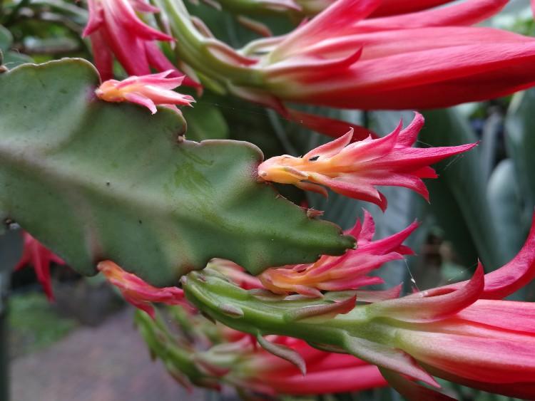 bloeiende cactus zijkant